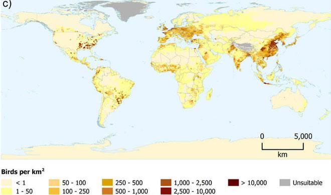 Mapa_com_distribuição_de_frango_pelo_mundo